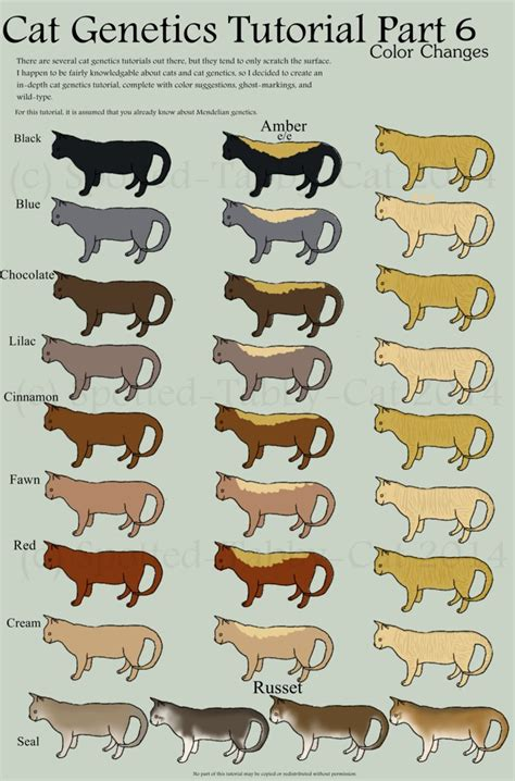 Colors Cat cat genetics tutorial part 7 color changes by spotted