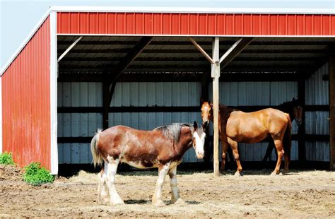 Animal Shelters in Horses