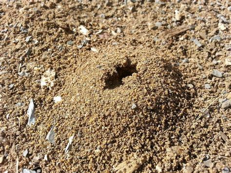 Ant Hole