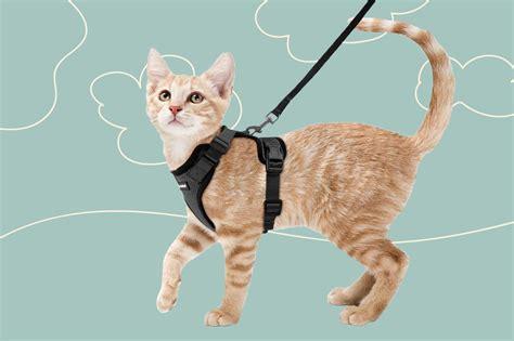 Cat Wearing Harness
