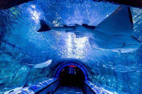 Cincinnati Aquarium