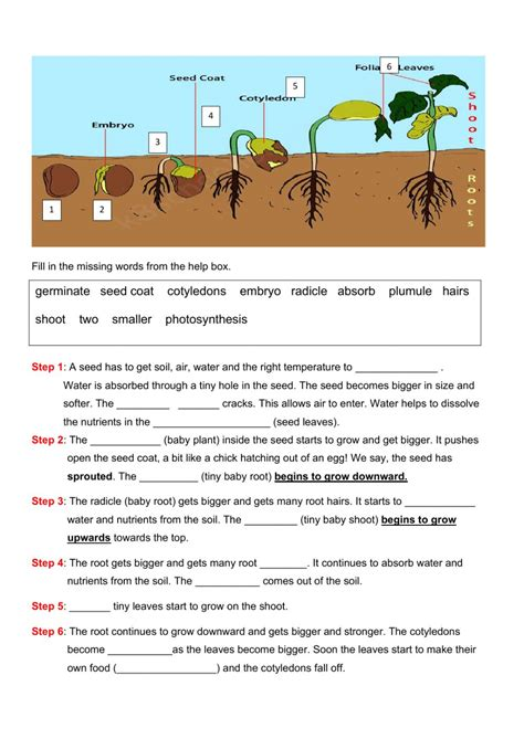 Galerry free printable plant worksheets Page 2