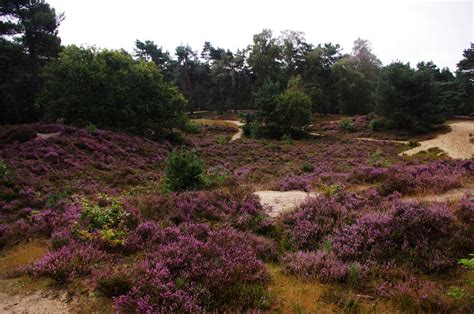 Heath Landscape
