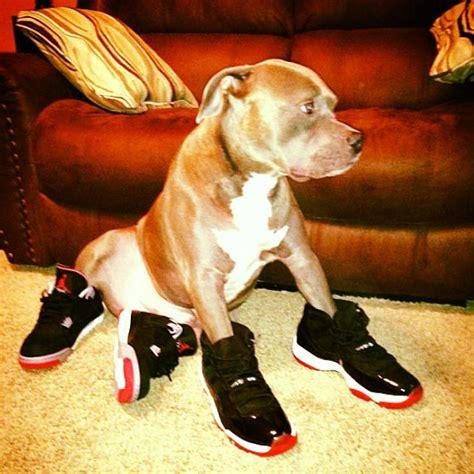 Jordans For Dogs