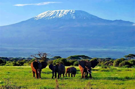 Kilimanjaro Kenya