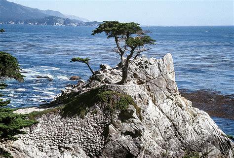 Lone Pine Monterey CA