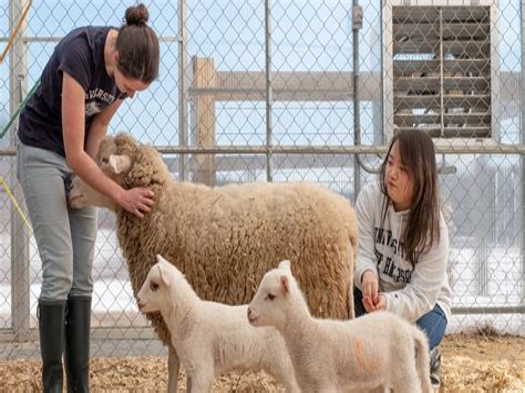 Science Animals