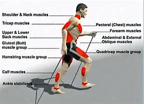 Walking Muscles