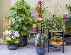 les 12 plantes vertes d int 233 rieur les plus faciles