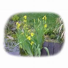 Teichpflanzen Richtig Pflanzen Lf46 Casaramonaacademy