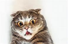 Bahaya Bulu Kucing Bagi Manusia Menurut Dokter Terpercaya