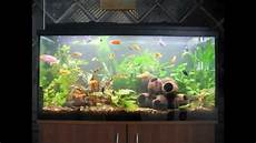 Creative Diy Aquarium Decorating Ideas