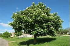 r 233 servez r 233 cup 233 rez et plantez arbres et arbustes