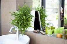 Zimmerpflanzen Für Gute Luft - zimmerpflanzen nachhaltig gut f 252 r raumklima gesund und