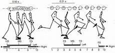 Tecnica Di Corsa Analisi Biomeccanica La Scienza In