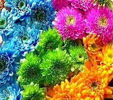 Beautiful Flower Wallpaper Zedge by 17 Best Images About Zedge Wallpapers On
