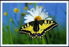 papillon en allemand cartes postales du monde papillon exotique immortalis 233 en