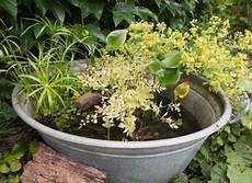 How To Build A Pond The Wildlife Trusts