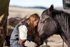 einmal abschauen bitte wie pferde vom menschen lernen