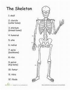 science worksheets human skeleton 12216 human skeleton diagram labelling sheets science skeletal system human skeleton science