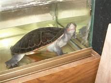 tortue eau douce aquarium bassin d int 233 rieur pour tortue aquariophilie org