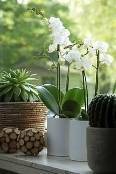 comment tirer le meilleur de votre orchid 233 e entretenir