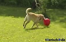 Hundespielzeug Für Große Hunde - hundeball f 252 r gro 223 e hunde kerbl g 252 nstig bestellen bei