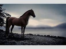 Wild Horse Wallpaper (59  images)