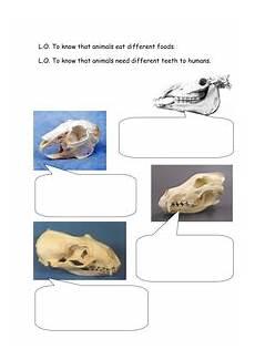 animal teeth worksheets 14367 teeth and science unit animal teeth by jenkate uk teaching resources tes