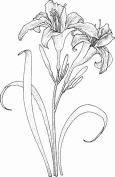 Malvorlagen Gratis Lilien Lilien Ausmalbild Mandala Zentangle Ausmalen
