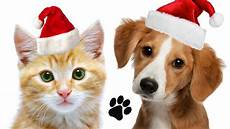 easymeworld make a christmas ornament for your pet
