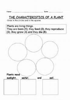english worksheets characteristics of a plant