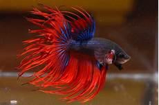 Jenis Ikan 7 Gambar Jenis Dan Cara Ternak Ikan