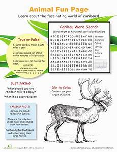 fun with caribou worksheet education com