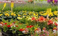 plantes par correspondance jardinerie en ligne acheter ses plantes par