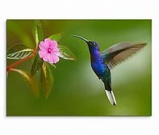 Malvorlage Vogel Mit Blume Leinwandbild 120x80cm Auf Keilrahmen Kolibri Bl 252 Te Blume