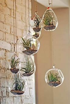 plante suspendue verre diy d 233 co avec des plantes succulentes en 80 photos home