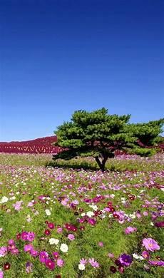 paesaggi fioriti parures housses de couette floral en 2019 paysages