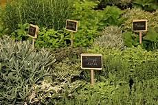 9 plantes aromatiques indispensables au potager gamm vert
