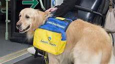 famille d accueil pour chien pendant les vacances l association handi chien recherche des familles d accueil pour 233 duquer des chiots