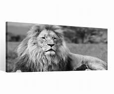 Keilrahmen Bilder Schwarz Weiß - leinwand 1 tlg l 246 we schwarz wei 223 afrika bild raubtier tier