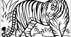 Lukisan Pensil Naga Dan Harimau Cikimm