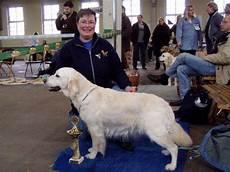 gewicht golden retriever hundeforum hundund