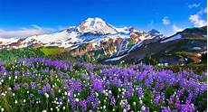 Flower Valley Wallpaper by Flower Valley In Mountain Wallpaper Wallpapersxplore