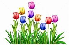 Gambar Kartun Bunga Tulips 187 Dondrup