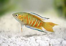 five ways to keep your family s pet fish alive