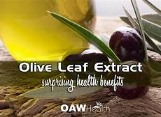 Extract Benefits by Surprising Health Benefits Of Olive Leaf Extract Oawhealth