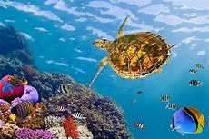 Unterwasser Tiere Malvorlagen Englisch Fototapete Die Wasserschildkr 246 Te Jetzt Bestellen