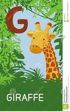 Letter G Animal Abc Royalty Free Stock Images Image