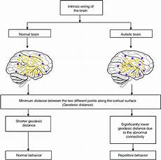 intrinsic wiring of the normal and autistic brain download scientific diagram